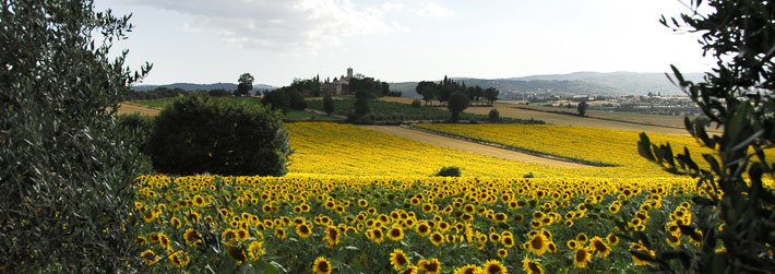 Farm holiday in Cortona, apartments to rent for your holidays in Tuscany. Italy