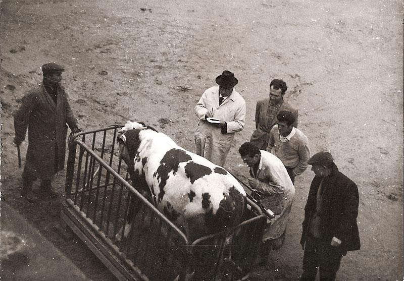 story: Farmhouse in Badicorte, Tuscany near Monte San Savino